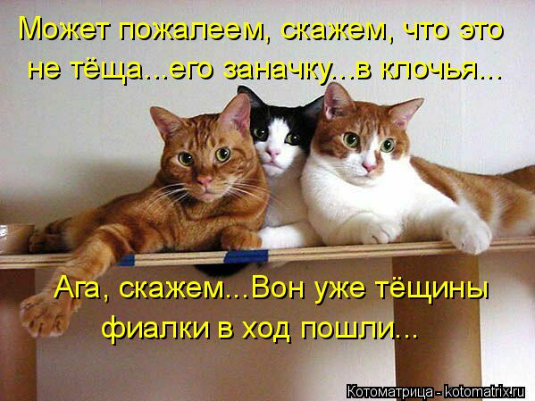 http://kotomatrix.ru/images/lolz/2014/06/27/kotomatritsa_e1.jpg