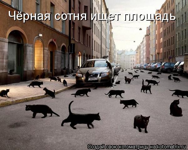 Котоматрица: Чёрная сотня ищет площадь