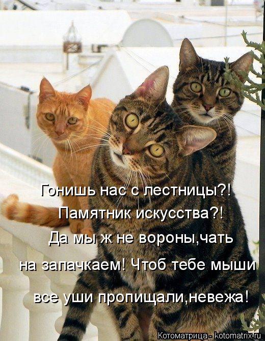 Котоматрица: Гонишь нас с лестницы?! Памятник искусства?! Да мы ж не вороны,чать  на запачкаем! Чтоб тебе мыши все уши пропищали,невежа!