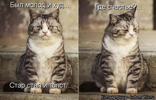 Котоматрица: Был молод и худ... Стар стал и толст... Где счастье?...