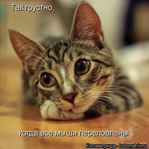 Котоматрица: Так грустно, когда все мыши переловлены...