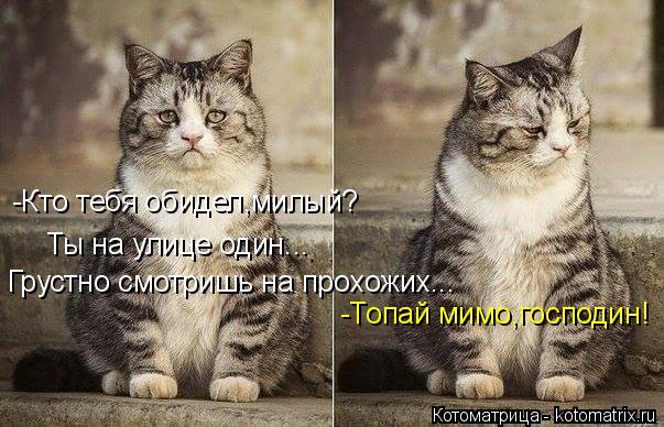 Котоматрица: -Кто тебя обидел,милый? Ты на улице один... Грустно смотришь на прохожих... -Топай мимо,господин!