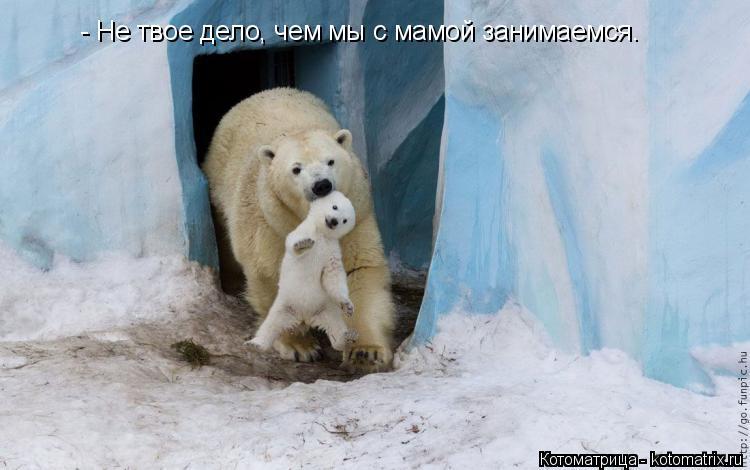 Котоматрица: - Не твое дело, чем мы с мамой занимаемся.