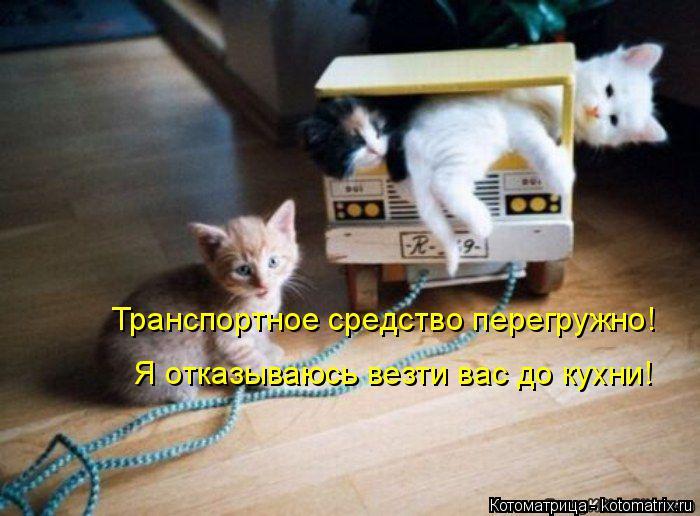 Котоматрица: Транспортное средство перегружно! Я отказываюсь везти вас до кухни!