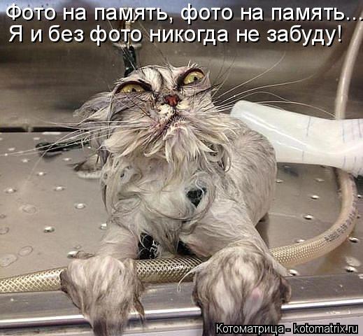 Котоматрица: Фото на память, фото на память... Я и без фото никогда не забуду!