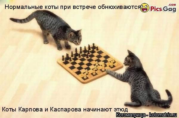 Котоматрица: Нормальные коты при встрече обнюхиваются Коты Карпова и Каспарова начинают этюд
