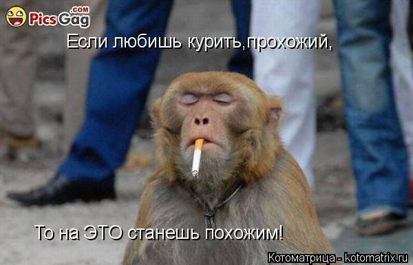 Котоматрица: Если любишь курить,прохожий, То на ЭТО станешь похожим!