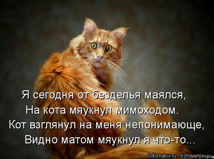 Котоматрица: Я сегодня от безделья маялся, На кота мяукнул мимоходом. Кот взглянул на меня непонимающе, Видно матом мяукнул я что-то...