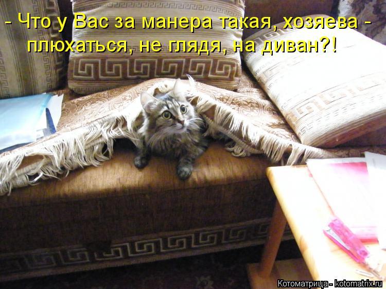 Котоматрица: - Что у Вас за манера такая, хозяева - плюхаться, не глядя, на диван?!