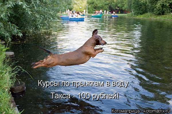 Котоматрица: Курсы по прыжкам в воду. Такса - 100 рублей!