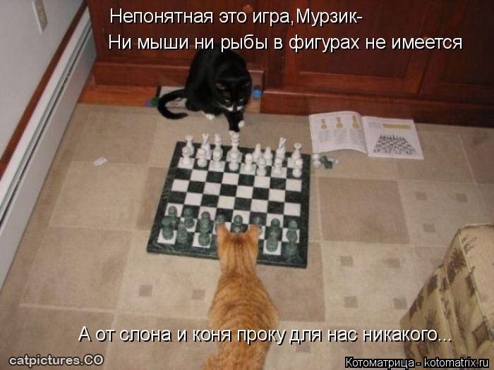 Котоматрица: Непонятная это игра,Мурзик- Ни мыши ни рыбы в фигурах не имеется А от слона и коня проку для нас никакого...