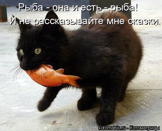 Котоматрица: Рыба - она и есть - рыба! И не рассказывайте мне сказки.