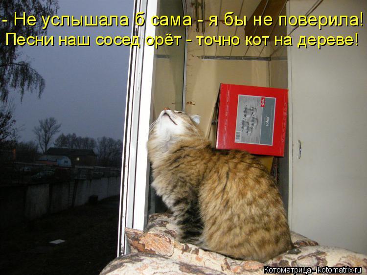 Котоматрица: - Не услышала б сама - я бы не поверила! Песни наш сосед орёт - точно кот на дереве!