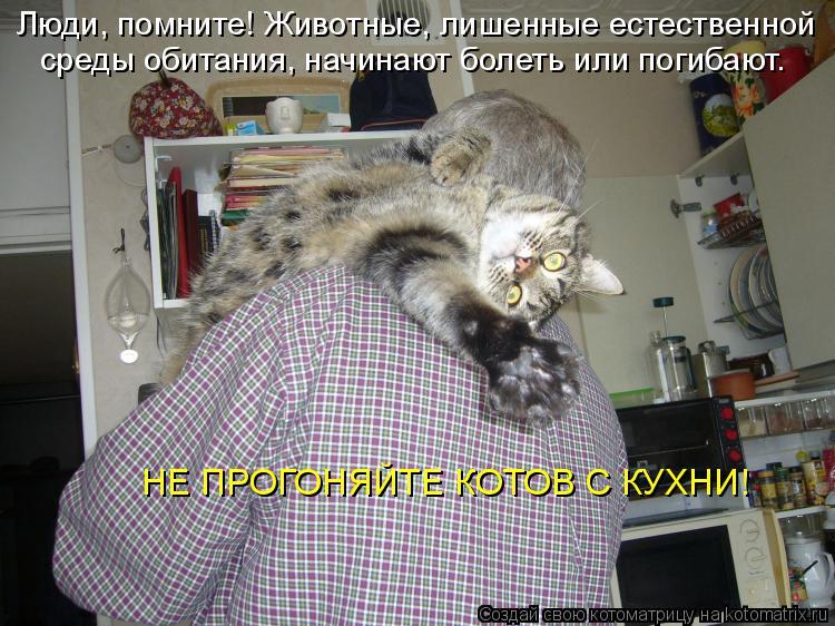 Котоматрица: Люди, помните! Животные, лишенные естественной среды обитания, начинают болеть или погибают. НЕ ПРОГОНЯЙТЕ КОТОВ С КУХНИ!