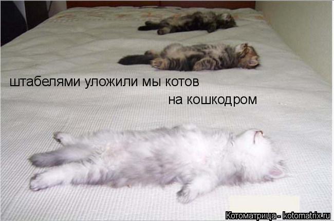 Котоматрица: штабелями уложили мы котов на кошкодром