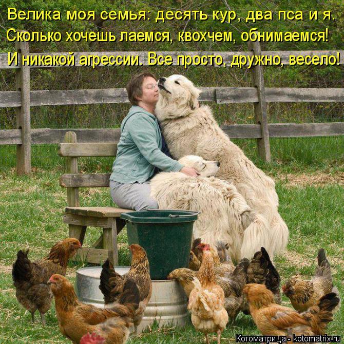 Котоматрица: Велика моя семья: десять кур, два пса и я. Сколько хочешь лаемся, квохчем, обнимаемся! И никакой агрессии. Все просто, дружно, весело!