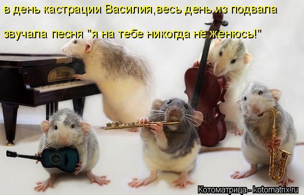 """Котоматрица: в день кастрации Василия,весь день из подвала звучала песня """"я на тебе никогда не женюсь!"""""""