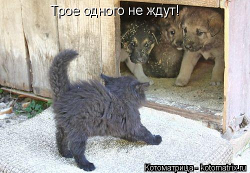 Котоматрица: Трое одного не ждут!