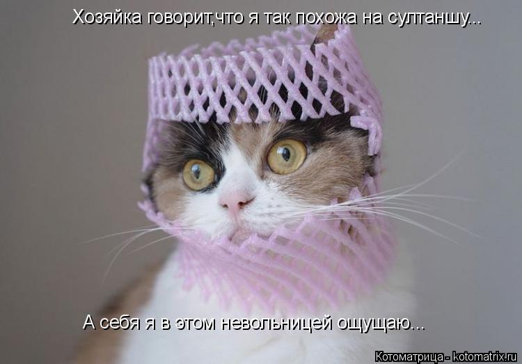 Котоматрица: Хозяйка говорит,что я так похожа на султаншу... А себя я в этом невольницей ощущаю...