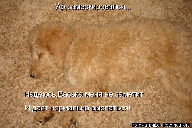 Котоматрица: Уф,замаскировался... Надеюсь,Васька меня не заметит И даст нормально выспаться!