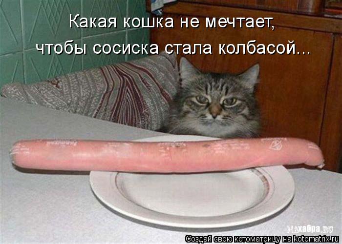 Котоматрица: Какая кошка не мечтает,  чтобы сосиска стала колбасой...