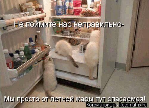 Котоматрица: Не поймите нас неправильно- Мы просто от летней жары тут спасаемся!