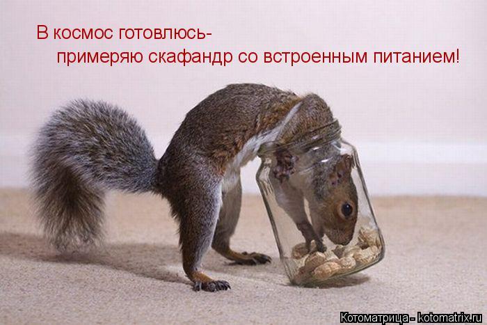 Котоматрица: В космос готовлюсь-  примеряю скафандр со встроенным питанием!
