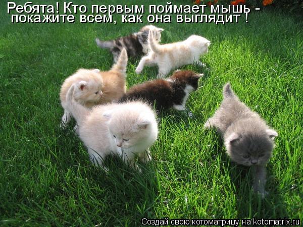 Котоматрица: Ребята! Кто первым поймает мышь - покажите всем, как она выглядит !