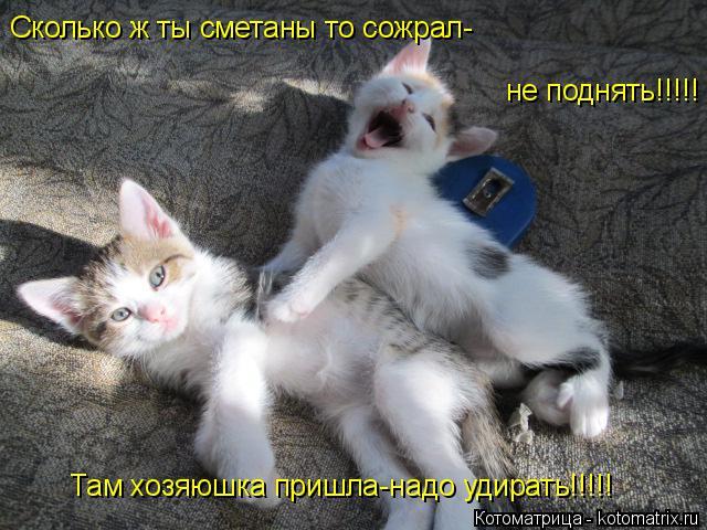 Котоматрица: Сколько ж ты сметаны то сожрал- не поднять!!!!! Там хозяюшка пришла-надо удирать!!!!!