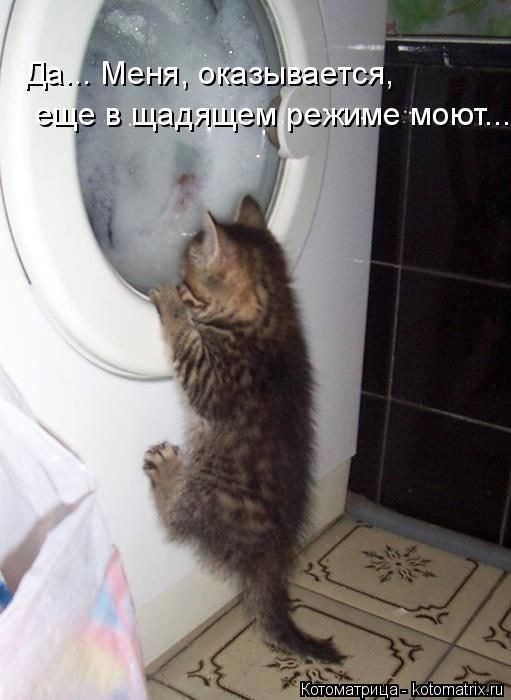 Котоматрица: Да... Меня, оказывается, еще в щадящем режиме моют...