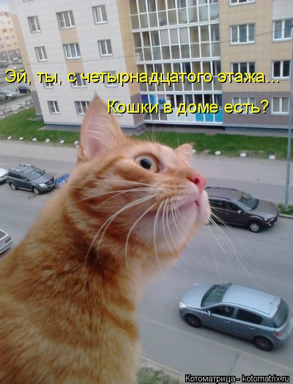 Котоматрица: Эй, ты, с четырнадцатого этажа... Кошки в доме есть?