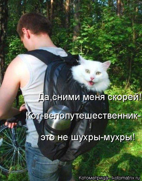 Котоматрица: Да,сними меня скорей! Кот-велопутешественник- это не шухры-мухры!