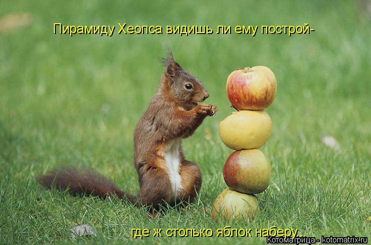 Котоматрица: где ж столько яблок наберу... Пирамиду Хеопса видишь ли ему построй-