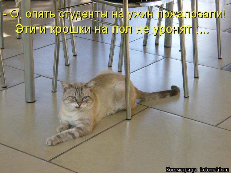 Котоматрица: - О, опять студенты на ужин пожаловали! Эти и крошки на пол не уронят ....