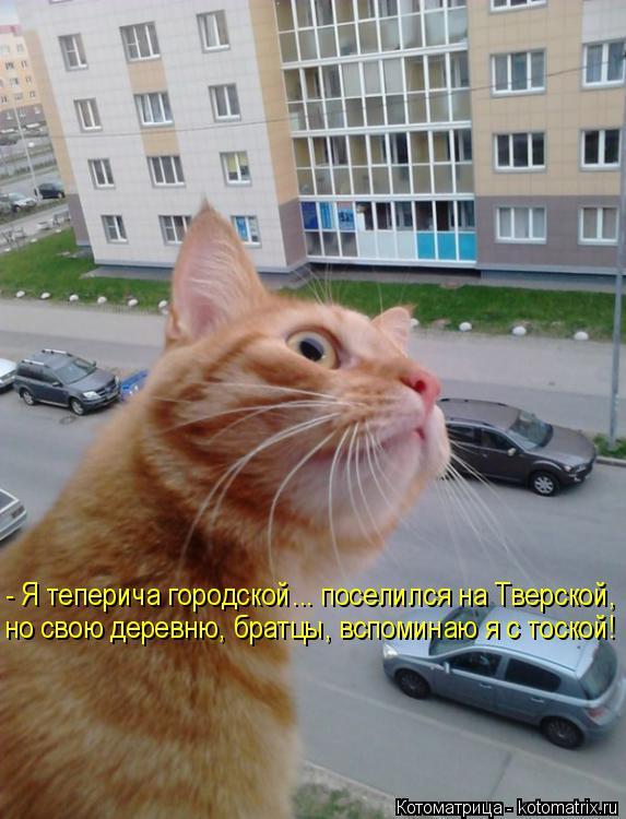 Котоматрица: - Я теперича городской... поселился на Тверской, но свою деревню, братцы, вспоминаю я с тоской!