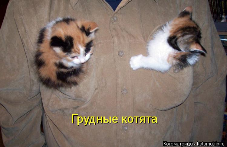 Котоматрица: Грудные котята