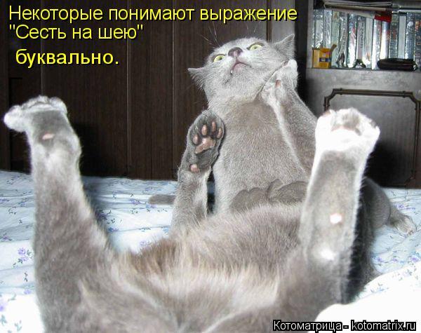 """Котоматрица: Некоторые понимают выражение """"Сесть на шею"""" буквально."""