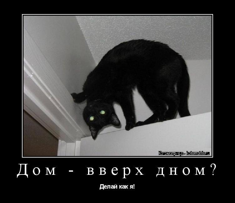 Котоматрица: Дом - вверх дном? Делай как я!