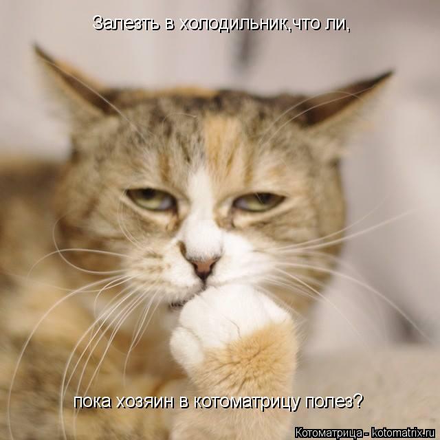Котоматрица: Залезть в холодильник,что ли, пока хозяин в котоматрицу полез?