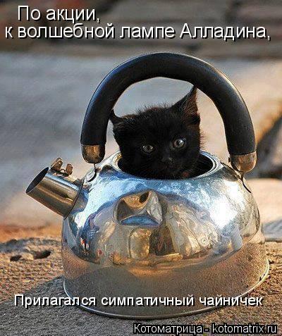 Котоматрица: По акции, к волшебной лампе Алладина, Прилагался симпатичный чайничек