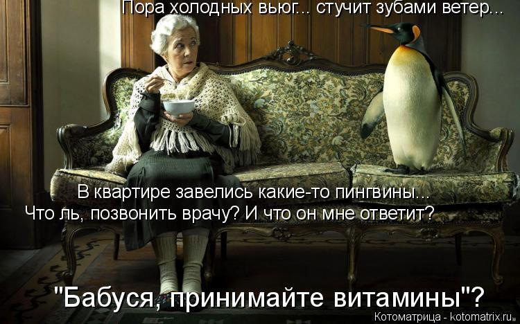 """Котоматрица: Пора холодных вьюг... стучит зубами ветер... В квартире завелись какие-то пингвины... Что ль, позвонить врачу? И что он мне ответит? """"Бабуся, при"""