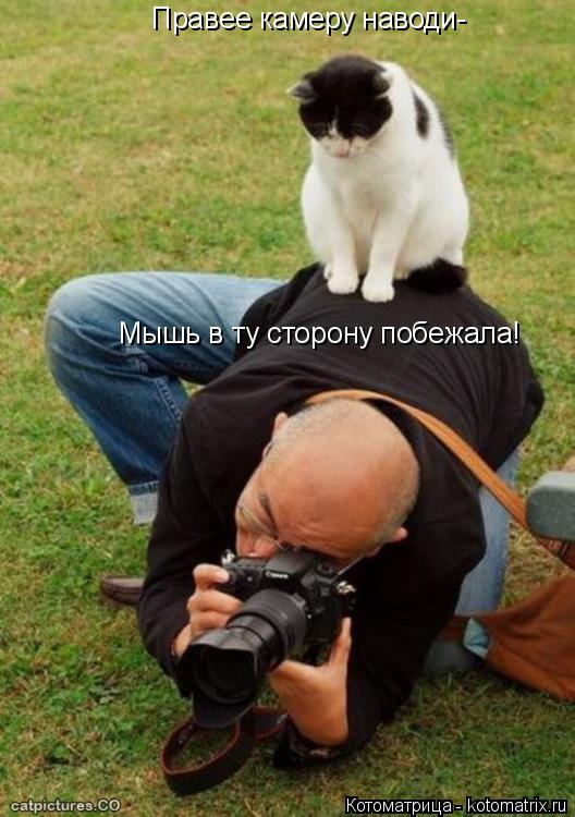 Котоматрица: Правее камеру наводи- Мышь в ту сторону побежала!