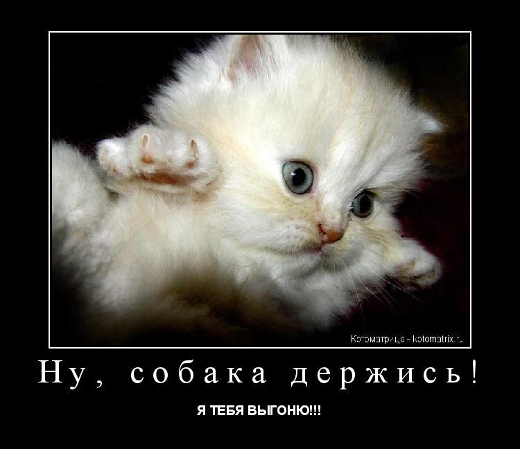 Котоматрица: Ну, собака держись! Я ТЕБЯ ВЫГОНЮ!!!
