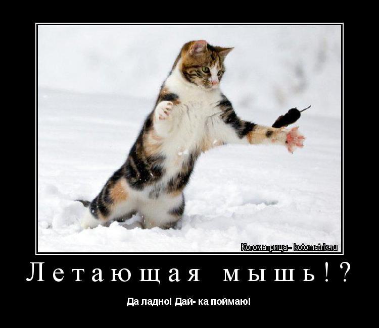 Котоматрица: Летающая мышь!? Да ладно! Дай- ка поймаю!