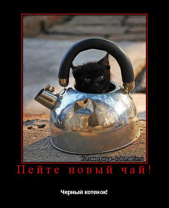 Котоматрица: Пейте новый чай! Черный котенок!