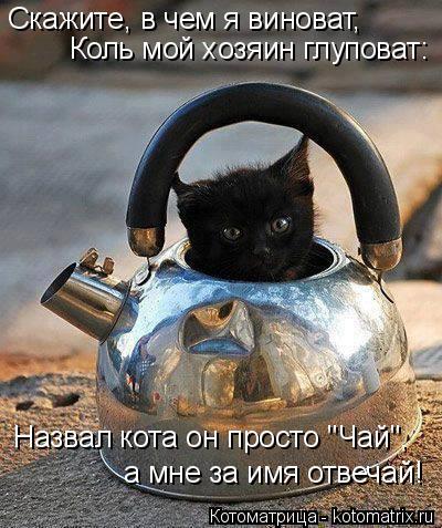 """Котоматрица: Скажите, в чем я виноват, Коль мой хозяин глуповат: Назвал кота он просто """"Чай"""", а мне за имя отвечай!"""