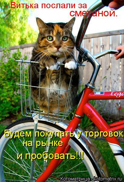 Котоматрица: - Витька послали за  сметаной. Будем покупать у торговок на рынке и пробовать!!!