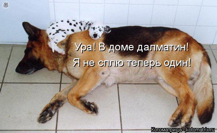 Котоматрица: Ура! В доме далматин! Я не сплю теперь один!