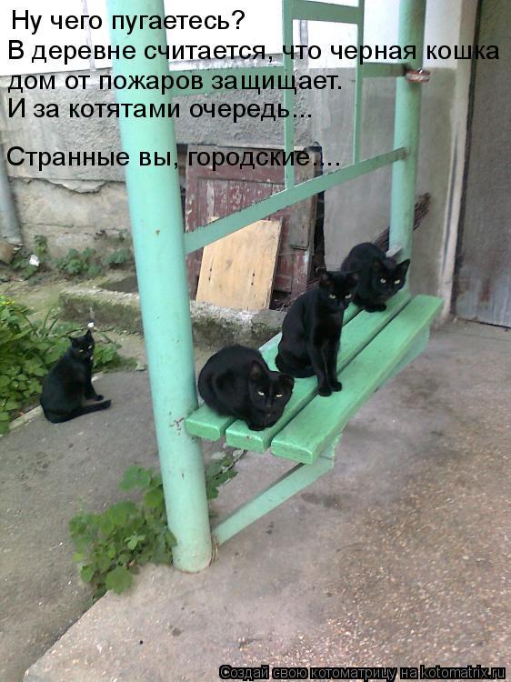 Котоматрица: Ну чего пугаетесь? В деревне считается, что черная кошка  дом от пожаров защищает. Странные вы, городские.... И за котятами очередь...