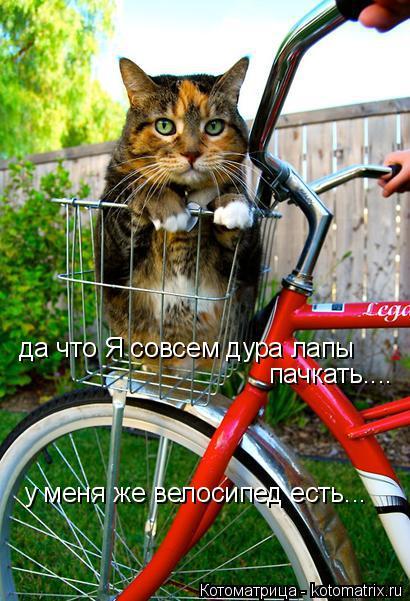 Котоматрица: да что Я совсем дура лапы пачкать.... у меня же велосипед есть...
